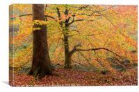 Autumn at Brock Bottom, Canvas Print