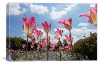 Skyline Tulips, Canvas Print