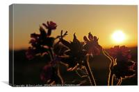 Flowering Sunset Glow, Canvas Print