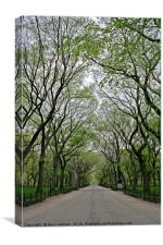 The Trees of Central Park, Canvas Print