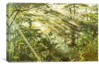 Queulat Park, Patagonia, Chile, Canvas Print