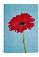 Gerber Daisy - Painterly, Canvas Print