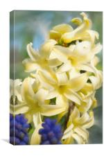 Hyacinth Painting, Canvas Print
