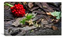 Forest Floor, Canvas Print