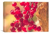 Berries , Canvas Print