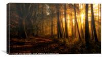 Golden Forest, Canvas Print