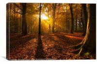 Magical Golden Forest, Canvas Print