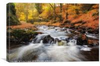 Autumn Alyth Den, Canvas Print