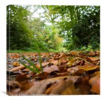 leaves at Blair Castle, Canvas Print