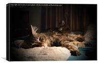 Relaxing in Duplicate, Canvas Print