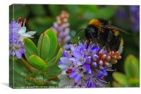 The Importance of Beeing a Bee, Canvas Print