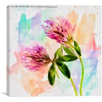 Two Clover Flowers with Pastel Shades., Canvas Print