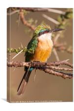 Bee Eater In A Thorn tree, Canvas Print