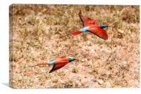 Carmine Bee Eater, Canvas Print