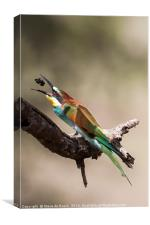 Eurasian Bee Eater, Canvas Print