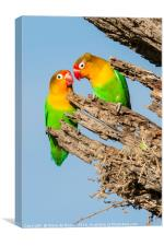 Lovebirds Nesting, Canvas Print