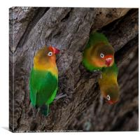 A Gathering Of Lovebirds, Canvas Print