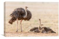 The Ostrich Family, Canvas Print