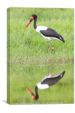 Saddle Billed Stork Hunting, Canvas Print