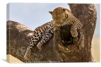 High And Mighty Leopard, Canvas Print