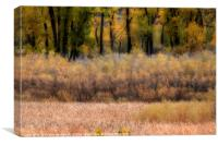 Yellow Wood - Autumn, Canvas Print