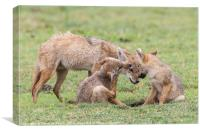 Golden Jackal With Cubs, Canvas Print