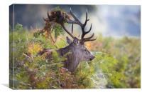 Beast of the Bracken, Canvas Print
