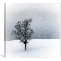 LONELY TREE Idyllic Winterlandscape, Canvas Print