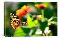 "A ""posing"" butterfly, Canvas Print"