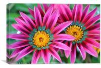 Glooming flowers, Canvas Print