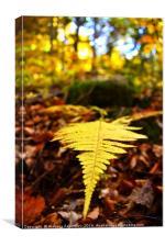 A fern during Autumn, Canvas Print