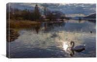 Swan at Balmaha, Loch Lomond, Canvas Print