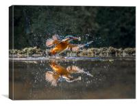 Kingfisher with fish, Canvas Print