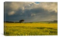 The rapeseed field, Canvas Print