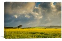 Dark clouds over a rape seed field, Canvas Print