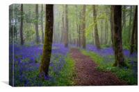 Bluebells magic, Canvas Print