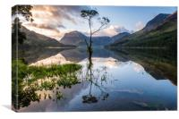 Lone Tree on Buttermere , Canvas Print