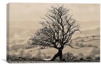 Eglwysilan Kneeling Tree, Canvas Print
