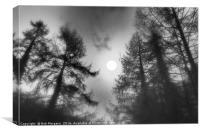 Sun Through The Trees     , Canvas Print
