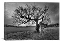 Lower Machen Old Oak Tree, Canvas Print