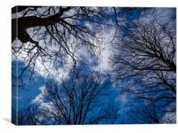 Woodland Sky, Canvas Print