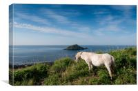 Mewstone Island and Dartmoor Pony, Canvas Print