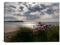 Sea Thrift in Cornwall, Canvas Print