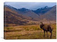 Scottish stag of Glen Etive, Canvas Print