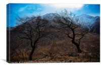 Trees over Glen etive, Canvas Print