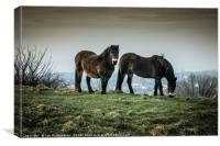 Ponies on the Hills, Canvas Print