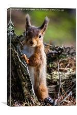 Squirrel Peep, Canvas Print