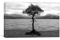 Tree in Loch Lomond, Canvas Print