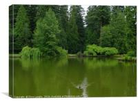 The Moody Greens of the Temperate Rain Forest Pond, Canvas Print
