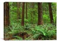Verdant Understory of the Temperate Rain Forest, Canvas Print